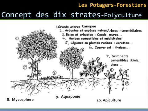 Image Potagers-Forestiers Strates